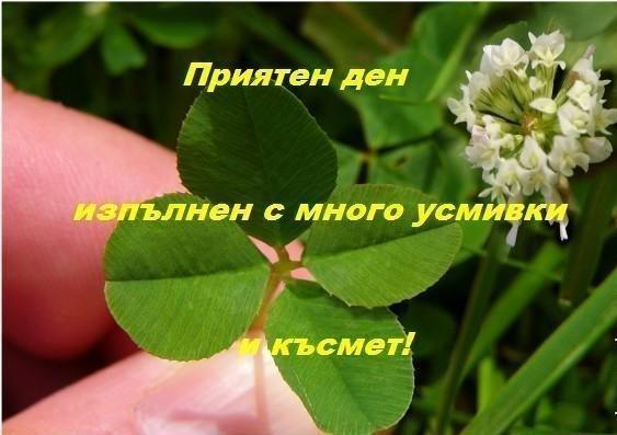 image-73FE_4C2271D3.jpg